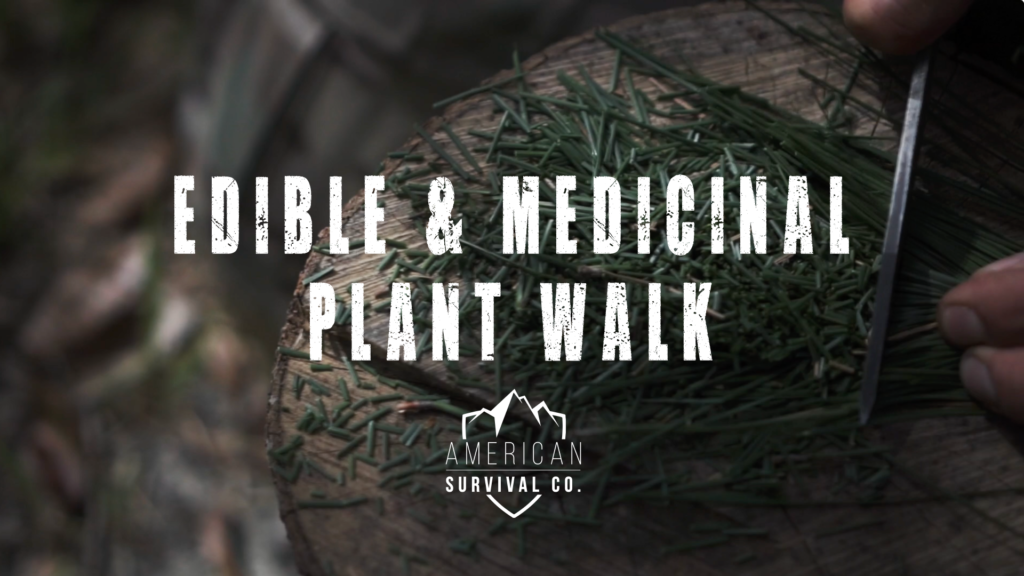 Jacksonville, FL Edible and Medicinal Plant Walk